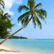 Beautiful palm tree over white sand beach — Stock Photo #11513536
