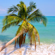 Beautiful palm tree over white sand beach — Stock Photo #11519079