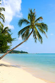 Beautiful palm tree over white sand beach — Stockfoto