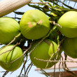 Coconuts on palm tree — Stock Photo #11521163