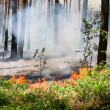 Forest fire — Stock Photo #11522361