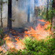 Forest fire — Stock Photo #11522432