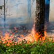 Forest fire — Stock Photo #11522670