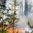 Forest Fire — Stock Photo #11522710