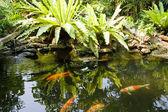 тропический сад дзэн — Стоковое фото