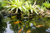 Jardim zen tropical — Foto Stock