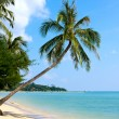 Beautiful palm tree over white sand beach — Stock Photo #11537241