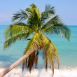 Beautiful palm tree over white sand beach — Stock Photo