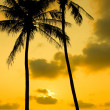 Palm Trees Silhouette At Sunset — ストック写真