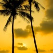 图库照片: Palm Trees Silhouette At Sunset