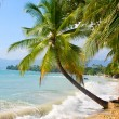Beautiful palm tree over white sand beach — Stock Photo #11743013