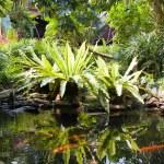 Tropical Zen Garden — Stock Photo #11829954