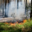 Forest fire — Stock Photo #11829987