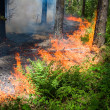 Forest fire — Stock Photo #11830001