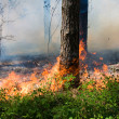 Forest fire — Stock Photo #11830019