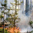 Stockfoto: Forest fire