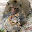 Monkey and domestic cat — Foto Stock