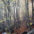Beech forest — Stock Photo #11009387