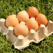 Chicken eggs on grass — Stock Photo #10776197