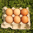 Chicken eggs are demolished — Stock Photo #10776447