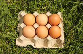 Chicken eggs are demolished — Stock Photo