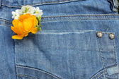 Flowers on the jeans — Stock Photo