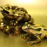 Two precious frog — Stock Photo
