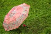 Pink umbrella — Stock Photo