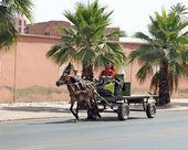 An arabian man driving a horse — Stock Photo