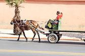 Un uomo arabo guidando un cavallo — Foto Stock
