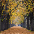 Autumn forest trail alley with jogger — Stock Photo #11341177
