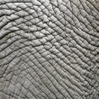 Elephant skin — Stock Photo #11341359