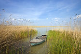 Old rowing boat among the reeds — Stock Photo