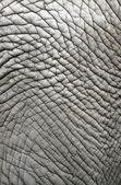 Elephant skin — Stock Photo