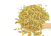 Dried seeds of fennel — Stock Photo