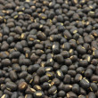 Seeds of black gram — Stock Photo