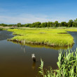 Tidal Wetland — Stock Photo