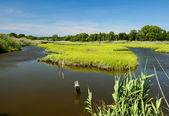 Tidal Wetland — Stock Photo