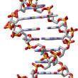 Stock Photo: DNDouble Helix