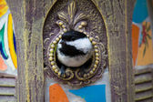 Black-capped chickadee in the birdhouse — Stock Photo