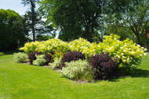 Flower bushes in a park — Stock Photo