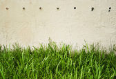 Green grass against wall — Stock Photo