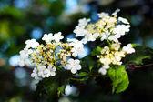Blomningstid — Stockfoto