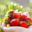 Strawberry in the hand - Foto de Stock