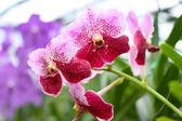 Beautiful orchid — Stock Photo