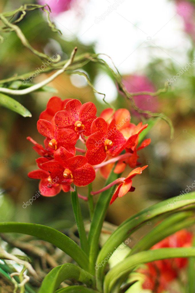 Орхідеї фото в природі фото 222-55