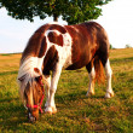 ������, ������: Small pony