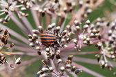 Beetle — Foto Stock