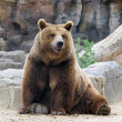 Looking at us smiling brown bear — Stock Photo #11731250