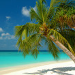 Beach with a palm tree — Stock Photo